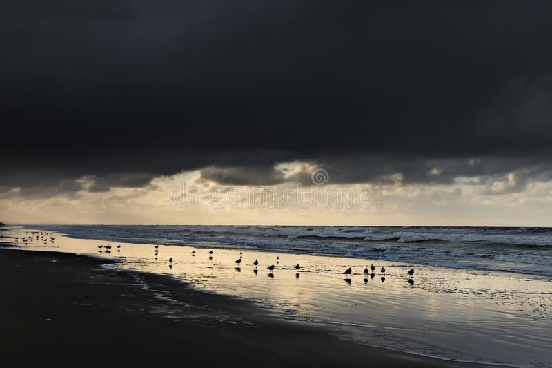 Oostduinkerke, Belgien - Seagulls i solnedgången arkivfoton