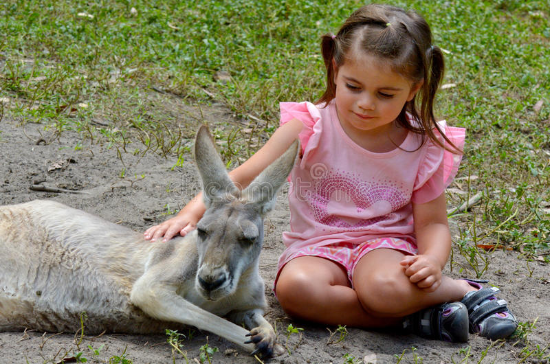 Oostelijk grijs kangoeroewijfje stock afbeeldingen