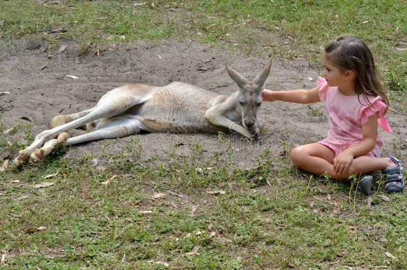Oostelijk grijs kangoeroewijfje royalty-vrije stock foto's