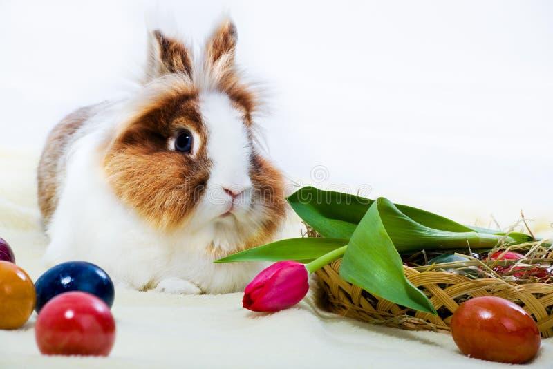 Oostelijk konijn stock fotografie