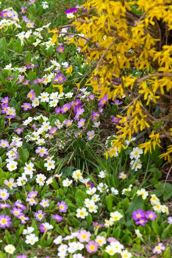 Download Oostelijke de lentebloemen stock foto. Afbeelding bestaande uit bloem - 114225006