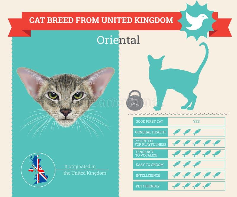 Oosterse infographics van het kattenras stock illustratie