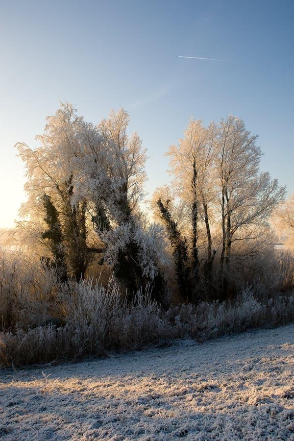 Oostvaardersplassen Almere Nederländerna som täckas i hoar-frost, Oo fotografering för bildbyråer