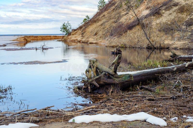 Oostzee vuile kustlijn dichtbij Saulkrasti-stad, Letland royalty-vrije stock foto
