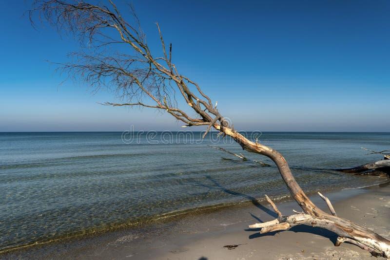 Oostzeekust op Darss stock afbeeldingen