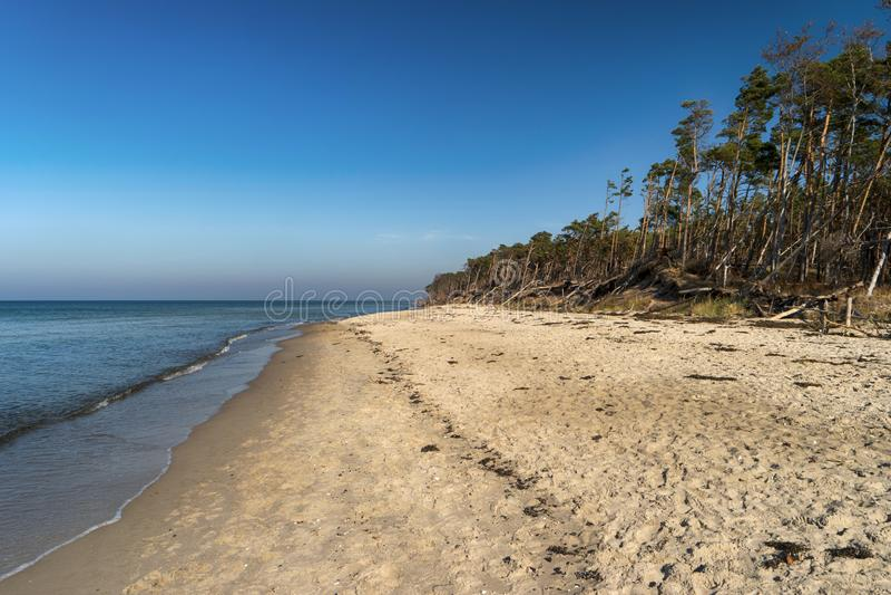 Oostzeekust op Darss royalty-vrije stock foto