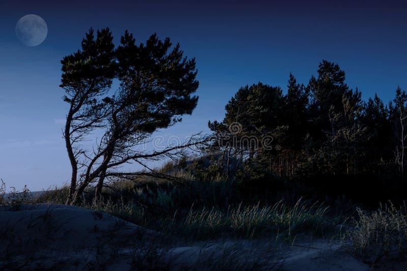 Oostzeekustlijn dichtbij Liepaja, Letland stock foto's