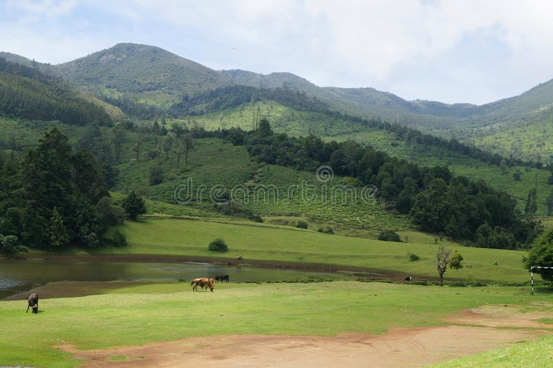 Ooty Tamil Nadu. Ooty, also known as Udhagamandalam, is a hill station in the state of Tamil Nadu, in southern India. Surrounded by trees, central Ooty Lake is a royalty free stock photography