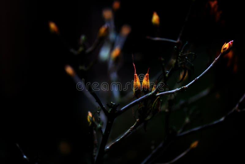 Opóźneni jesień koloru żółtego kwiaty obrazy royalty free