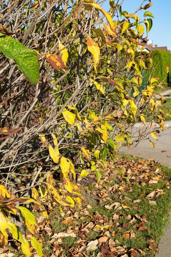 opóźneni jesień liście na drzewnym, pięknym jesieni tle, soczyści jesień kolory, ciepła jesieni fotografia zdjęcie royalty free