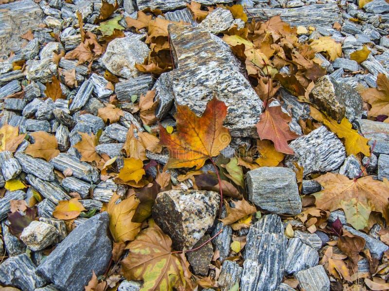 Opóźniona jesień Jaskrawi liście na skalistej powierzchni obrazy stock