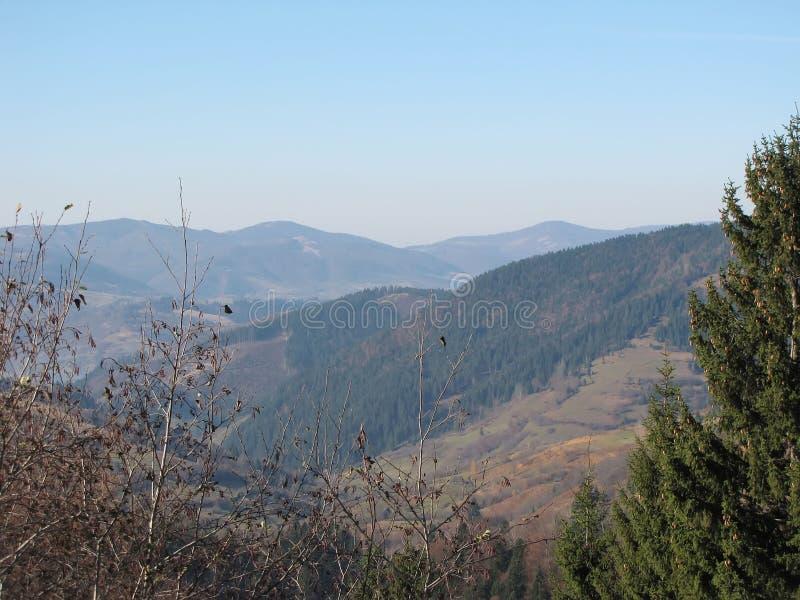 Opóźniona jesień w Carpathians obrazy royalty free
