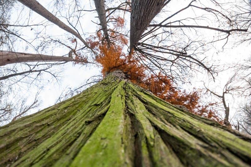 Opóźniona jesień w parku z kolorowymi liśćmi zdjęcia royalty free