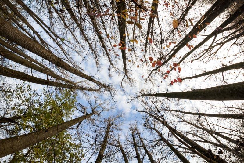 Opóźniona jesień w parku z kolorowymi liśćmi zdjęcia stock