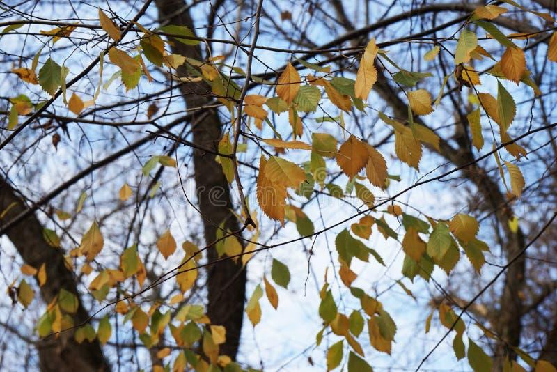 Opóźniona jesień w parku z kolorowymi liśćmi obraz royalty free