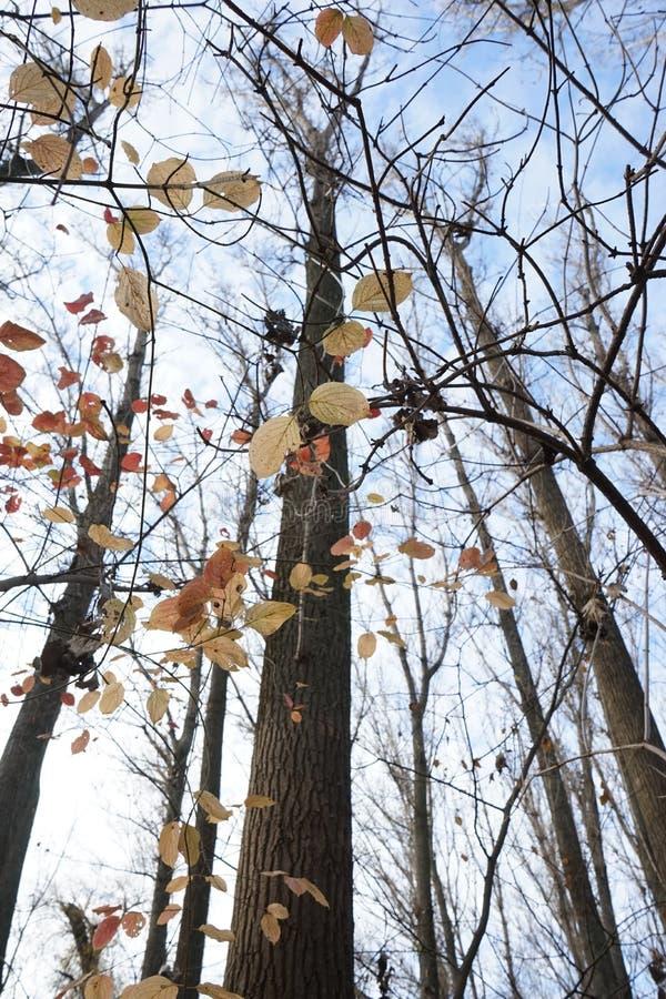 Opóźniona jesień w parku z kolorowymi liśćmi obrazy stock