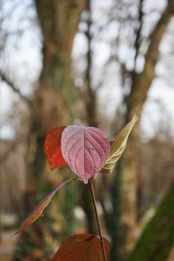 Opóźniona jesień w parku z kolorowymi liśćmi obraz stock