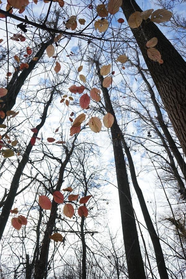 Opóźniona jesień w parku z kolorowymi liśćmi obrazy royalty free