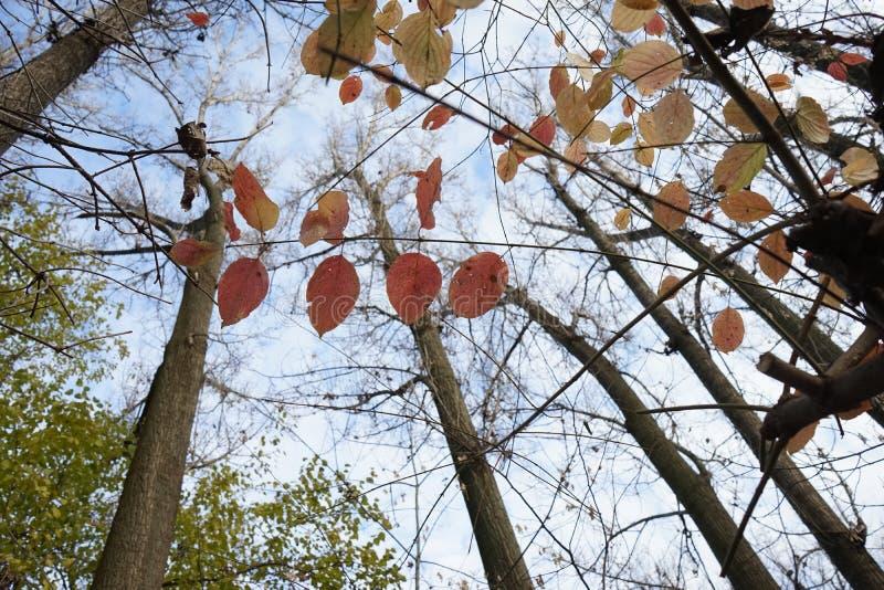 Opóźniona jesień w parku z kolorowymi liśćmi zdjęcie royalty free