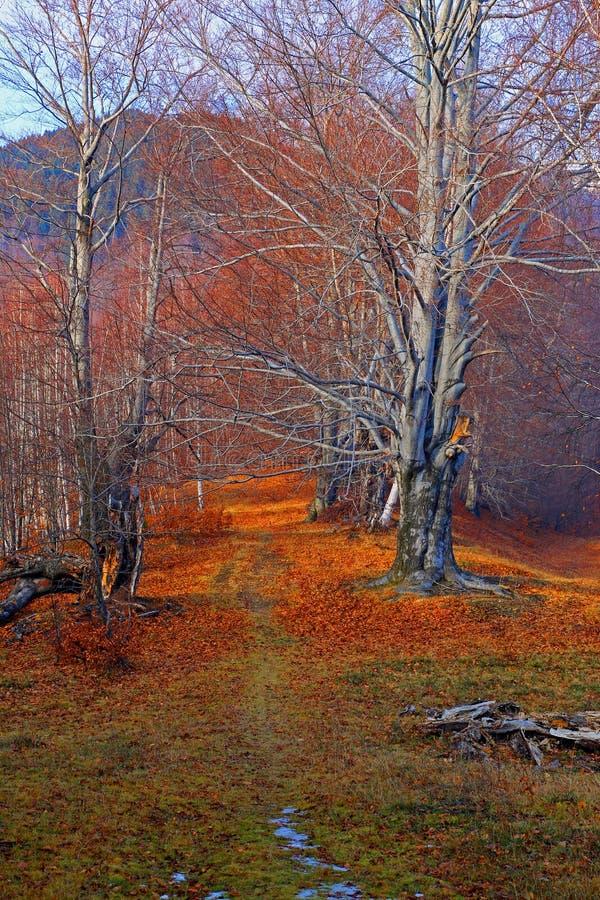 Opóźnionej jesieni Lasowa ścieżka fotografia royalty free