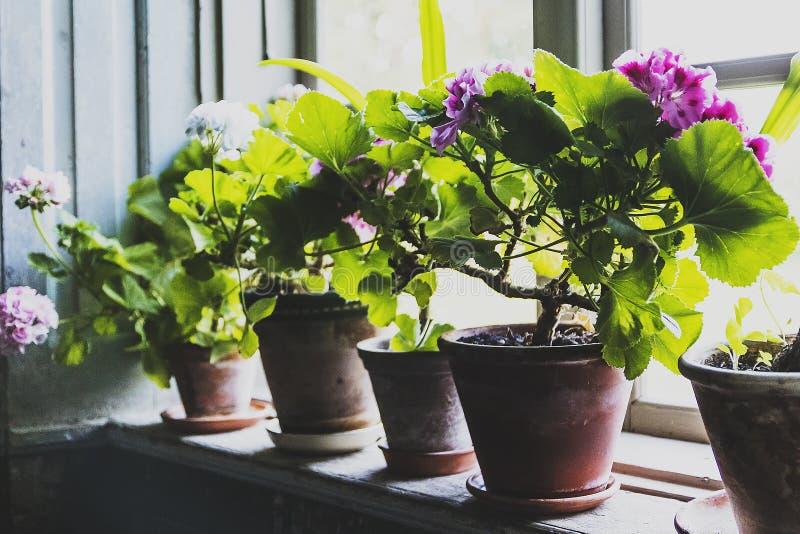 Op buiten het venster royalty-vrije stock foto
