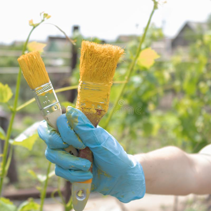 Op de hand draagt een blauwe handschoen waarin er twee die borstels in gele verf in openlucht worden gesmeerd zijn stock afbeelding