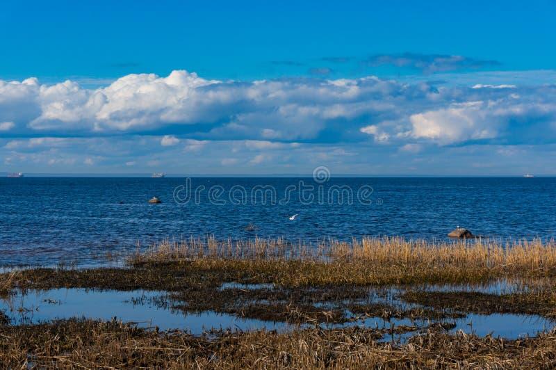 Op de kust van de Golf van Finland in de vroege lente op een duidelijke zonnige dag De lente op de baai Zuidenkust van de Golf va stock afbeelding