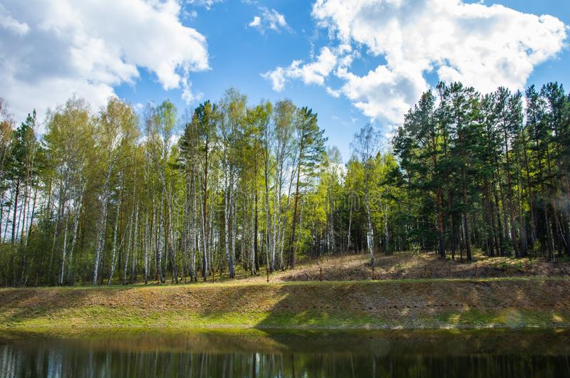 Op de kust van het meer is er een mooi bos stock afbeelding