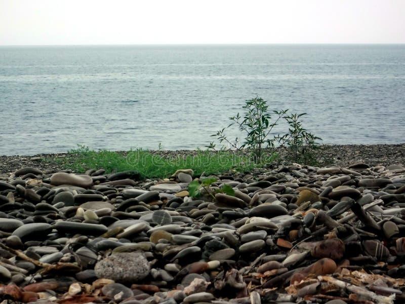 Op de kust van de Zwarte Zee vóór een onweersbui royalty-vrije stock foto's