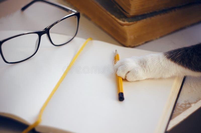 Op de lijst zijn glazen, een potlood en een notitieboekje, kat bereikt voor een potlood met zijn poot royalty-vrije stock foto's