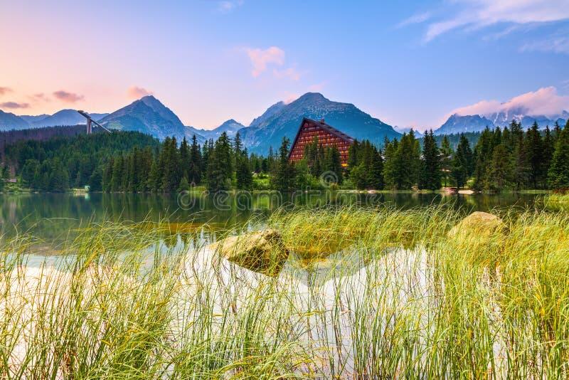 Op de meerkust met hoog gras royalty-vrije stock fotografie