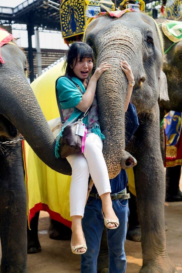 Op de Olifanten toon bang gemaakte meisjeslift bij de boomstam van de olifant royalty-vrije stock foto's