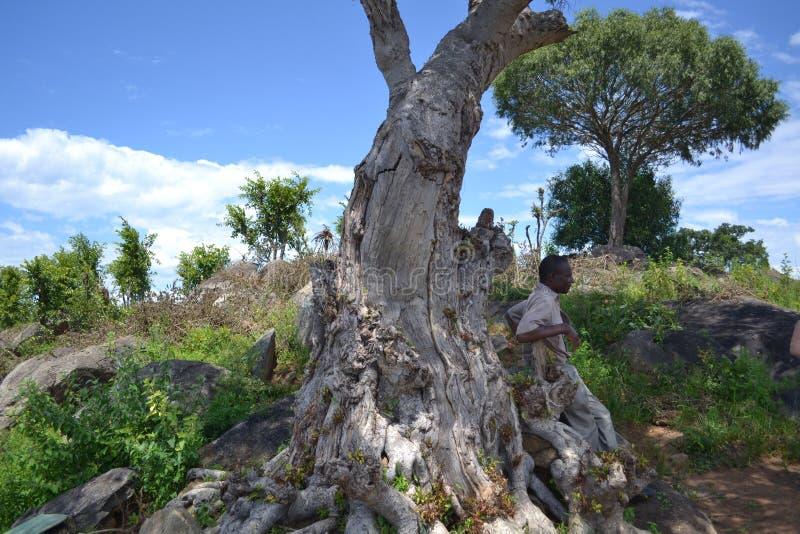 Op de safari in Zimbabwe stock afbeelding