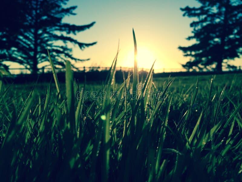Op dicht gras royalty-vrije stock afbeelding