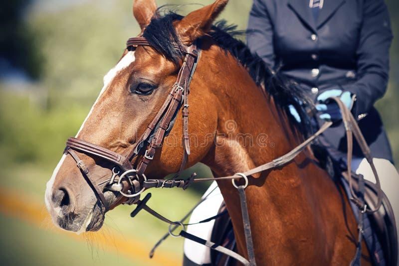 Op een Baai zit het paard een ruiter gekleed in een donkerblauw kostuum royalty-vrije stock fotografie