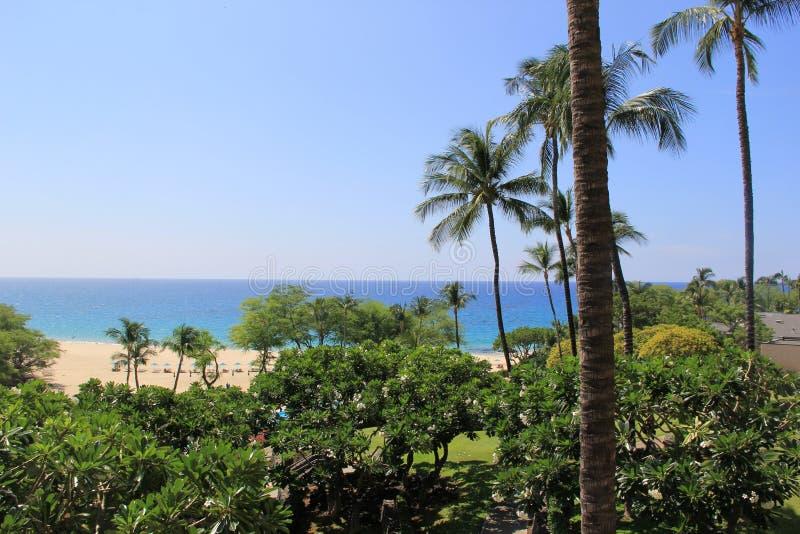 Op een strand Overzees het zand schommelt de aard van Hawaï zonnige palmpool royalty-vrije stock afbeeldingen