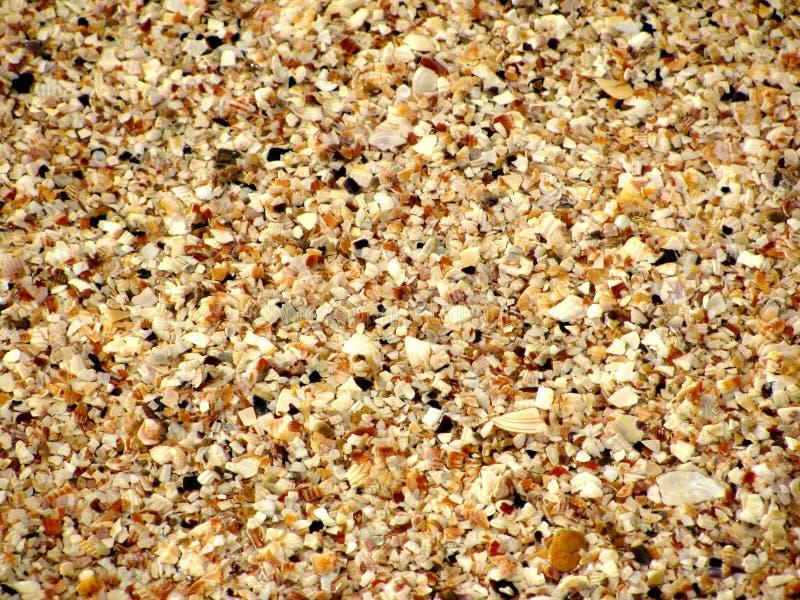 Op een zandige strand kleine kiezelstenen en schaaldieren stock foto's