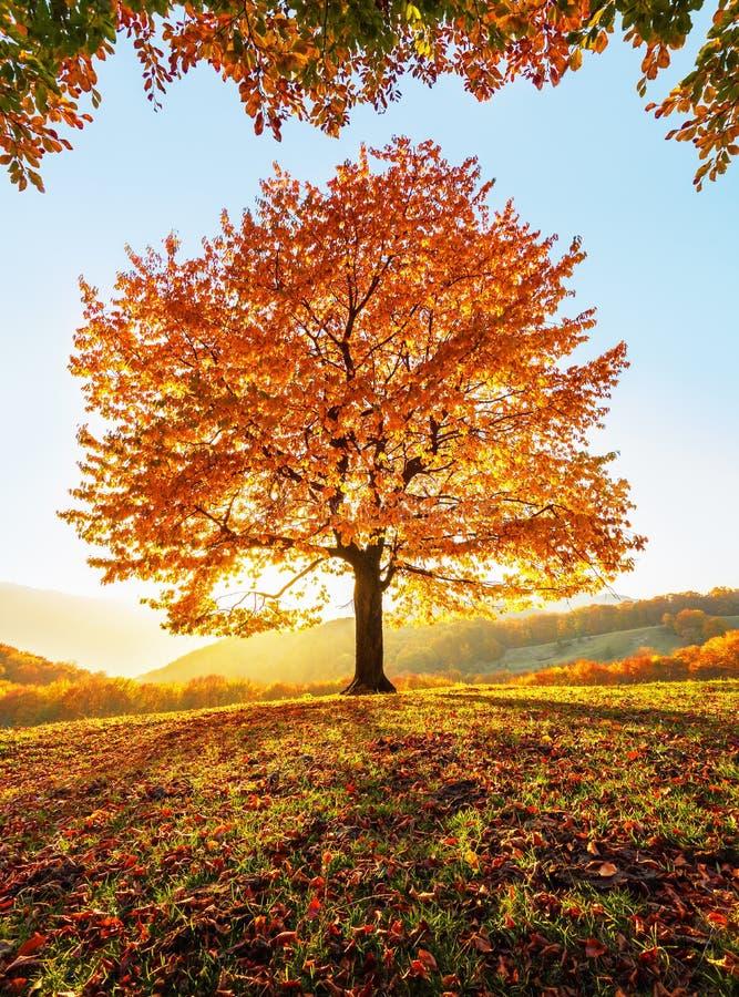 Op het gazon dat met bladeren bij het hooggebergte wordt behandeld is er een eenzame aardige weelderige sterke boom De majestueuz royalty-vrije stock foto