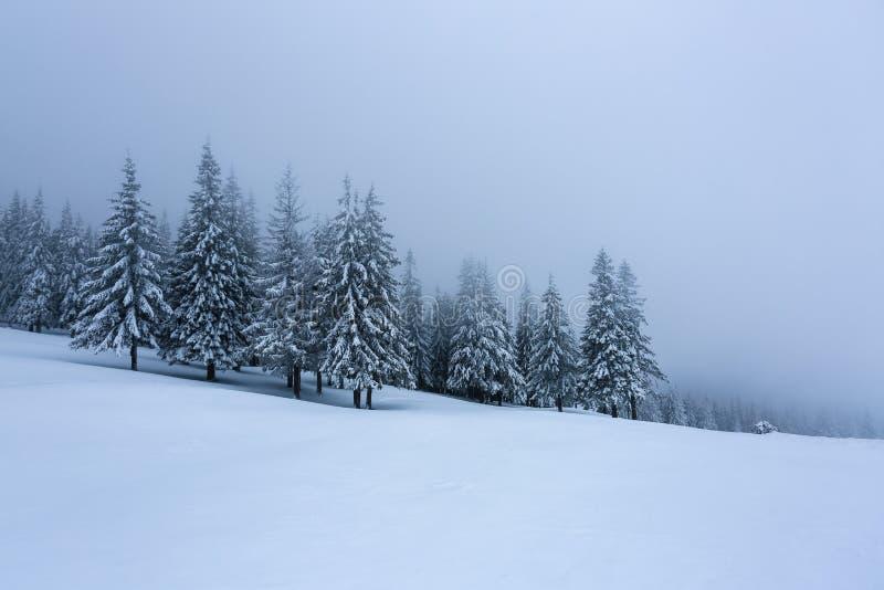 Op het gazon met sneeuw wordt bevinden de aardige bomen met sneeuwvlokken in ijzige de winter mistige ochtend die worden zich geg royalty-vrije stock foto's