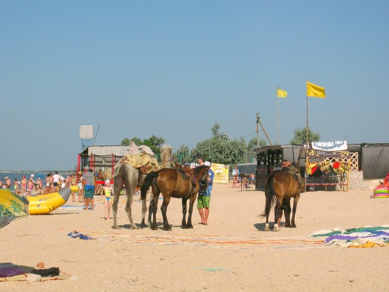 Op het overzeese van Azov strand in dorp Golubitskaya Rusland royalty-vrije stock foto's