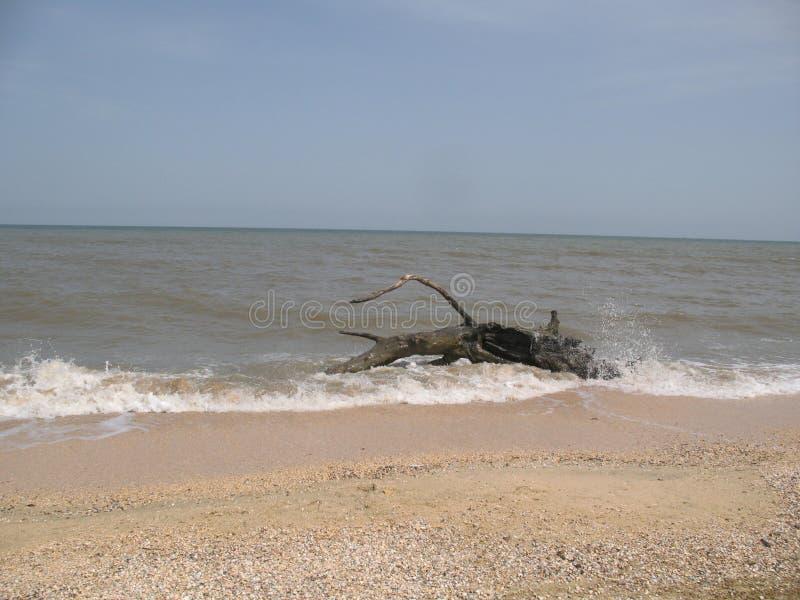 Op het overzeese van Azov strand in Golubitskaya Rusland stock foto's