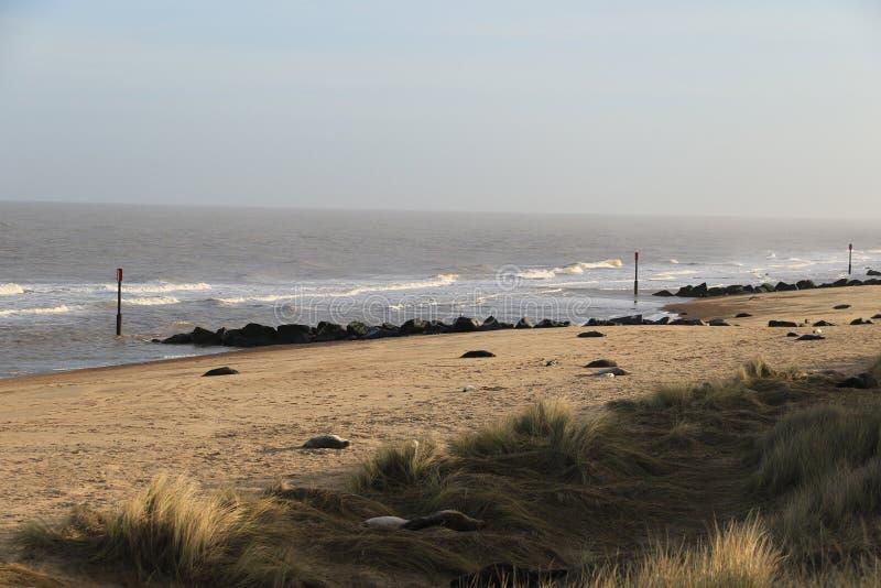 Op het Strand van Horsey Gap stock foto's