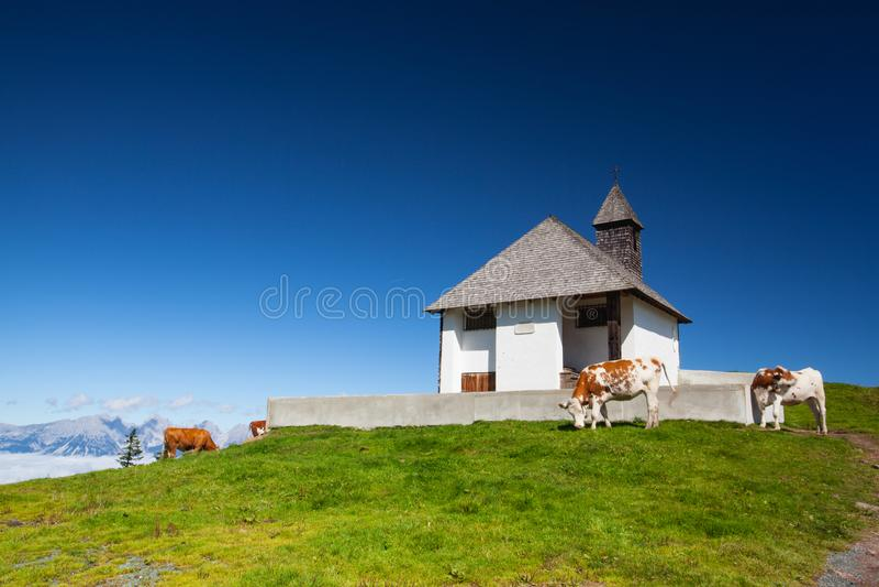 Op het weiland in de Alpen van Tirol, Oostenrijk royalty-vrije stock foto's