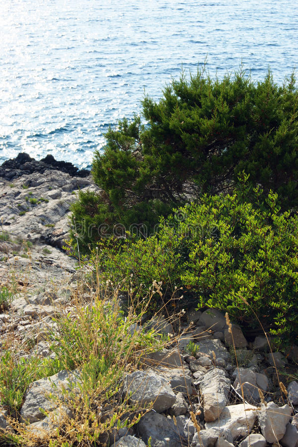 Op het wilde strand van het schiereiland Lustica in Montenegro stock foto