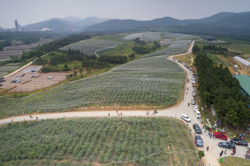 Op 9 Juni, 2018, in xuancheng, anhuiprovincie, scheen het bosbessenhout met gaas wordt behandeld om met een laag kleren worden be stock afbeeldingen