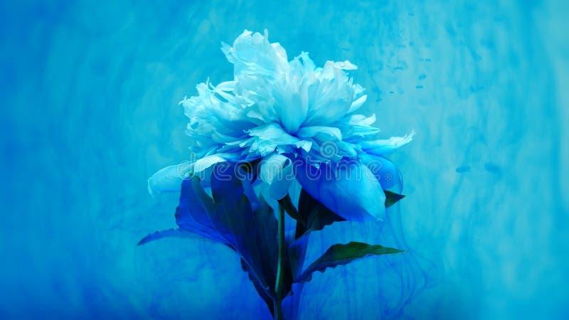 Op mooie bloemen die verf gieten stock illustratie