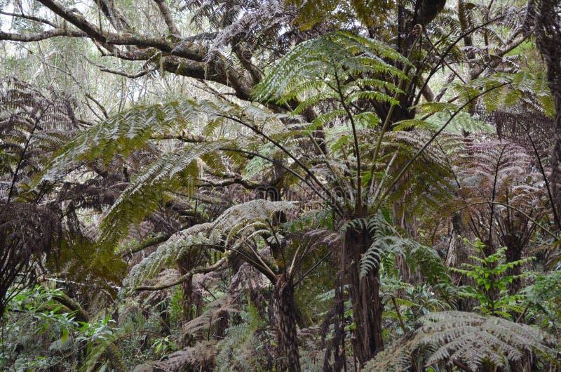 Opacifiez les forêts, les mousses et les fougères en parc national de Rèunion image stock