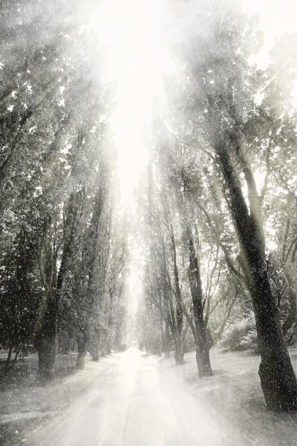 opad śniegu obrazy royalty free