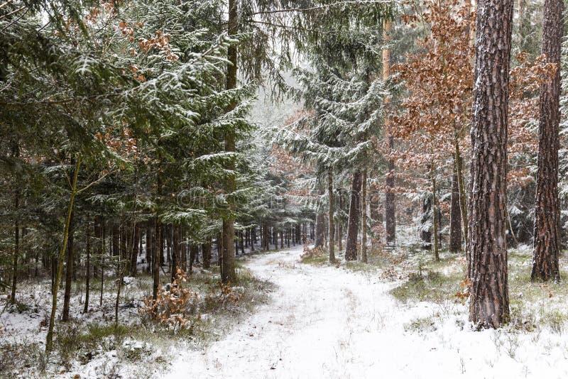 Opad śniegu w lasowym zima krajobrazie Południowy Artystyczny region zdjęcia stock