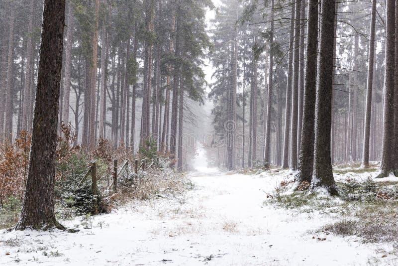 Opad śniegu w lasowym zima krajobrazie Południowy Artystyczny region zdjęcie stock